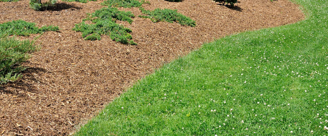Is an Invasive Plant Ruining Your Landscape? Let Our Experts Eradicate It!
