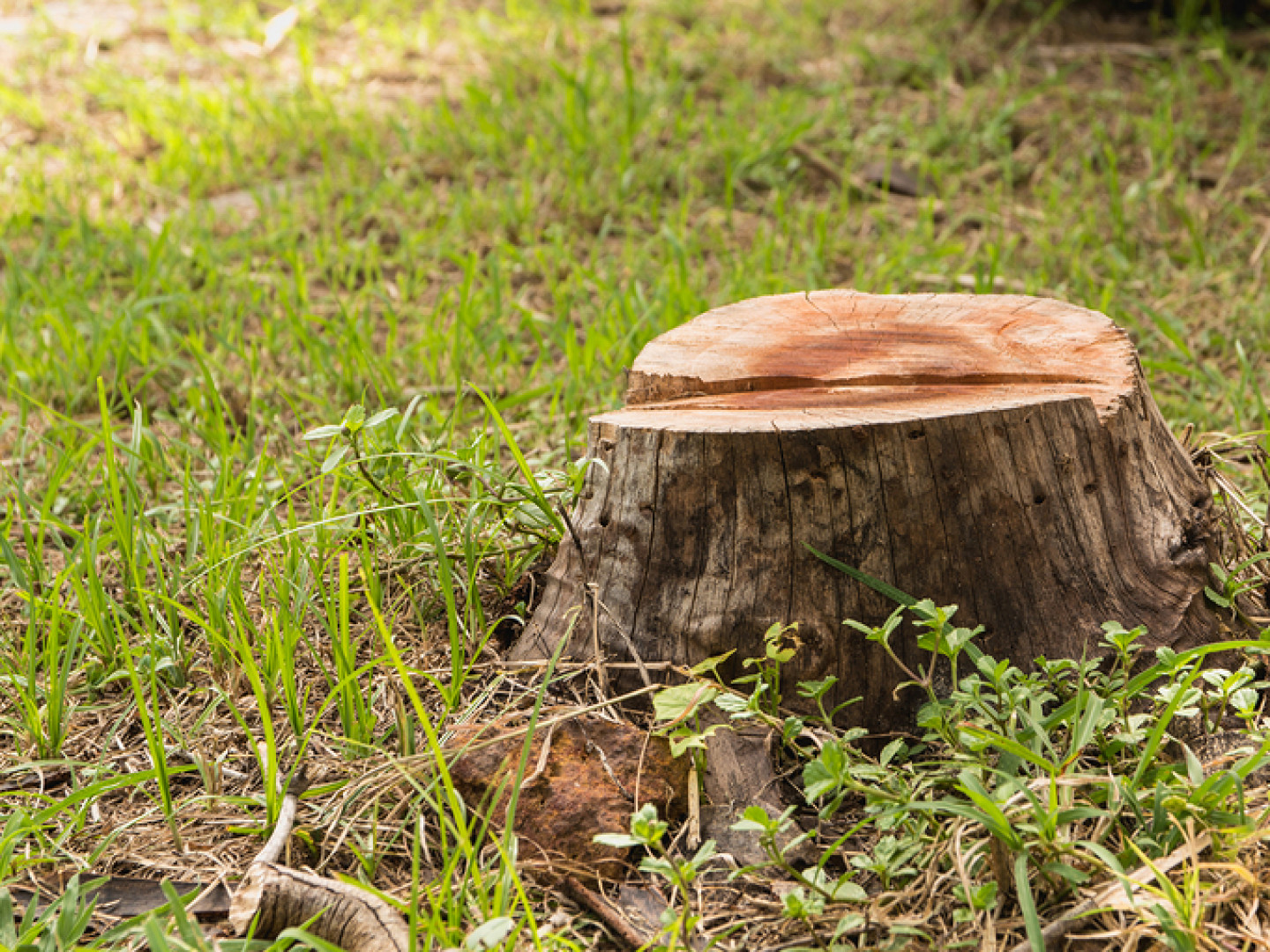Rid Your Yard of Unsightly Tree Stumps